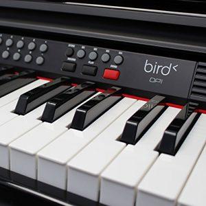 Bird DP1